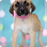 Adopt A Pet :: Alice - Waldorf, MD