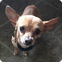 Adopt A Pet :: Benjamin - Austin, TX
