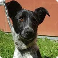 Adopt A Pet :: Luca - Sunnyvale, CA