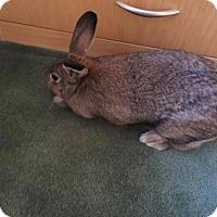 Adopt A Pet :: Zena - Maple Shade, NJ