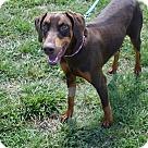 Adopt A Pet :: Kya