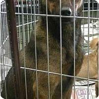 Adopt A Pet :: Bella - Fowler, CA