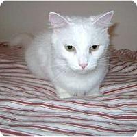 Adopt A Pet :: Snowie - Etobicoke, ON