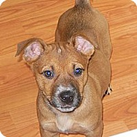 Adopt A Pet :: Blaire - maryville, TN