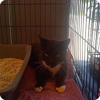 Adopt A Pet :: Jazzy - Zolfo Springs, FL