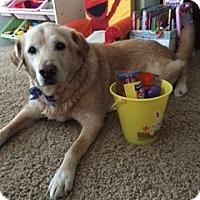 Adopt A Pet :: Scrappy - Yorktown, VA
