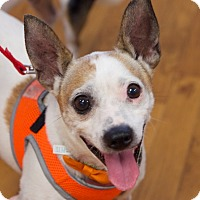 Adopt A Pet :: Barney - Knoxville, TN