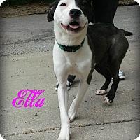 Adopt A Pet :: Ella - Muskegon, MI
