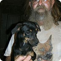 Adopt A Pet :: Mark - Evensville, TN