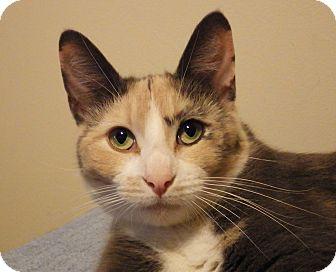 Domestic Shorthair Cat for adoption in Quail Valley, California - Gaia