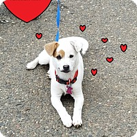 Adopt A Pet :: SASHA - Gustine, CA