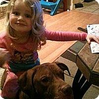 Adopt A Pet :: Jack CP - Dayton, OH