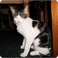 Adopt A Pet :: Loraina - Milwaukee, WI