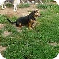 Adopt A Pet :: Pedro - Irvington, KY