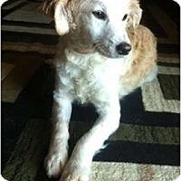 Adopt A Pet :: Travis - Oceanside, CA