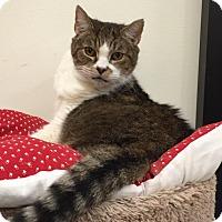 Adopt A Pet :: Kit Kat - Chesapeake, VA