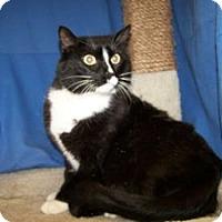 Adopt A Pet :: Jake - Colorado Springs, CO