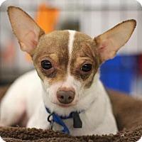 Adopt A Pet :: Petey - Sacramento, CA