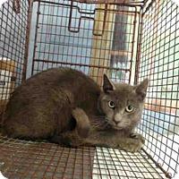 Adopt A Pet :: A501245 - San Bernardino, CA