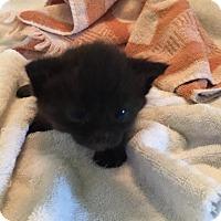 Adopt A Pet :: Ella - Melbourne, FL