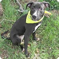 Adopt A Pet :: LADY BUG - Oklahoma City, OK