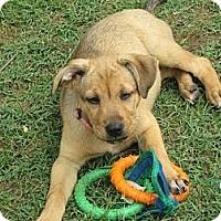 Adopt A Pet :: June - Humboldt, TN