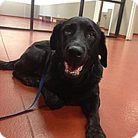 Adopt A Pet :: Alexis - Cumming, GA