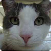 Adopt A Pet :: Achillies - Winter Haven, FL