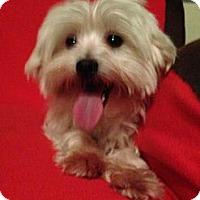 Adopt A Pet :: wendy - pasadena, CA