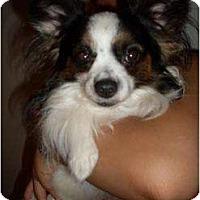 Adopt A Pet :: Mickey - Foster, RI
