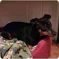Adopt A Pet :: Lexy - Springvale, ME