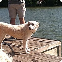 Adopt A Pet :: Heidi - Roanoke, VA