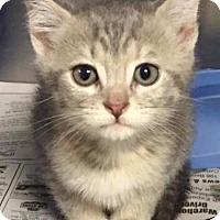 Adopt A Pet :: Maisy - Chattanooga, TN