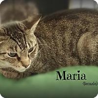 Adopt A Pet :: Maria - Springfield, PA