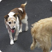 Adopt A Pet :: Orville - Indianapolis, IN