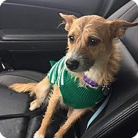 Adopt A Pet :: Pixie Sticks - Garden City, MI