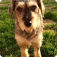 Terrier (Unknown Type, Small) Mix Dog for adoption in Millersville, Maryland - Sophie