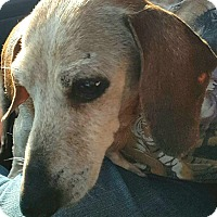 Adopt A Pet :: Twinkie - Andalusia, PA