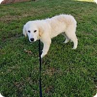 Adopt A Pet :: Sydney - Scottsboro, AL
