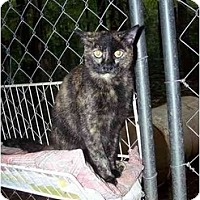 Adopt A Pet :: Brandi - Winnsboro, SC