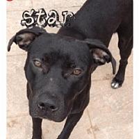 Adopt A Pet :: Blackstar - Geismar, LA
