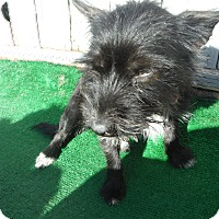 Adopt A Pet :: Lexi @ Petsmart SLO Sat. - Atascadero, CA