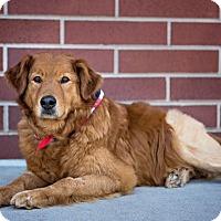 Adopt A Pet :: Scooter - Denver, CO