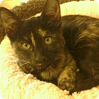 Adopt A Pet :: Brisket and Sierra - Lake Charles, LA