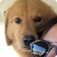 Adopt A Pet :: Hedde - New Canaan, CT