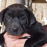 Adopt A Pet :: Peaches - Glastonbury, CT