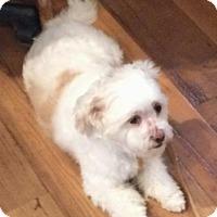 Adopt A Pet :: Winter - Homer Glen, IL