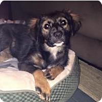 Adopt A Pet :: Nia - Marlton, NJ