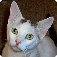 Adopt A Pet :: Ratchet - Chattanooga, TN
