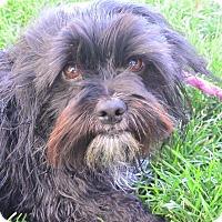 Adopt A Pet :: Skittles - Meridian, ID